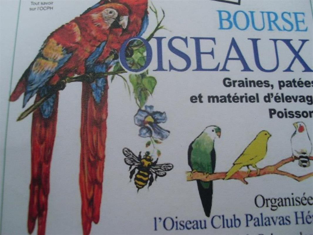 Salon de l 39 oiseau et de la nature palavas les flots for Salon camping montpellier